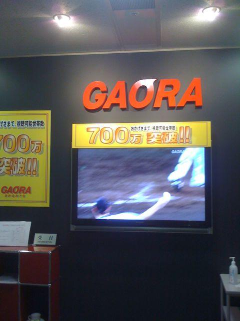 gaora1